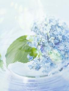 朦胧花朵图片
