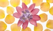 花团锦簇38图片