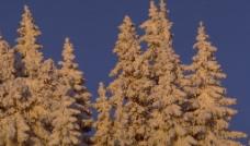 森林树木国外素材图片