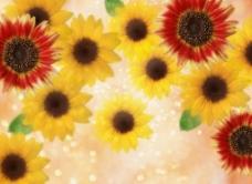 梦幻背景花卉图片