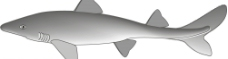 矢量魚圖片