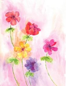 绘画花卉图片