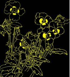 白描花卉5图片