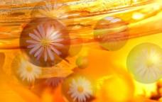 鲜味果汁3图片