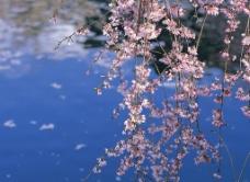 春暖花开 花卉图片
