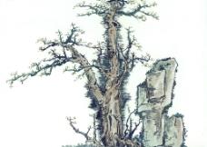 古画树木图片