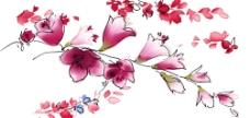 花  素材图片