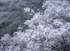 精品底纹素材-冬天雪景图片