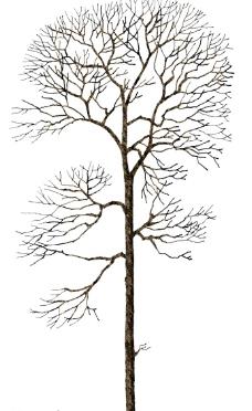 枯树6图片