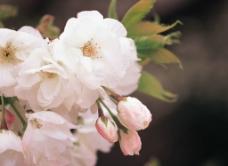 精品花卉系列 花的世界图片