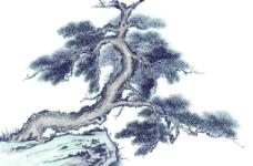 国画系列—古树奇石(63张)图片