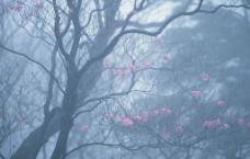 精品花卉系列- 花的世界图片