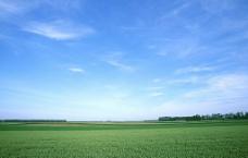 蓝天绿草图片