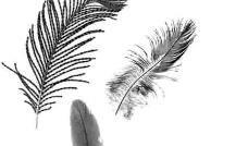 各种漂亮的羽毛笔刷