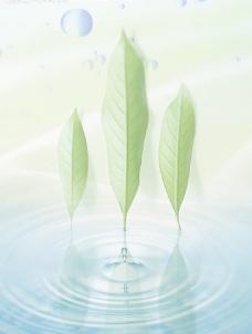 绿色 绿叶 水滴图片