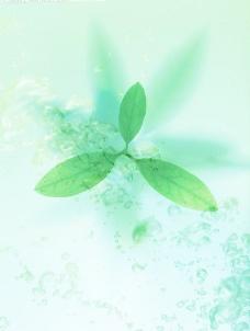 绿色 绿叶 水滴 水波 波纹 水纹图片