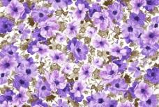 花纹花样图片