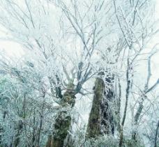 雪景24图片