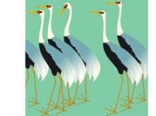 自然鹤图片