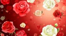 花的背景图片