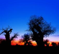 枯树13图片