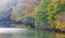 秋林风景图片