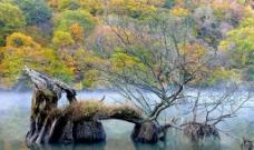 秋水山景图片