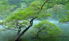 绿树山水图片