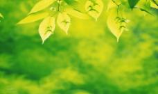漂亮树叶图片