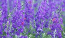 花之色彩图片