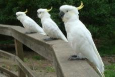 罕见鹦鹉图片