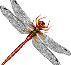 psd蜻蜓图片