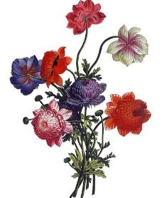 花束3图片